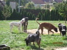 Freunde und Gäste 2009/10_2